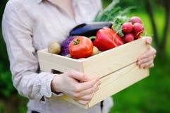 Κηπουρός που κρατά το ξύλινο κλουβί με τα φρέσκα οργανικά λαχανικά από το αγρόκτημα Στοκ Εικόνα