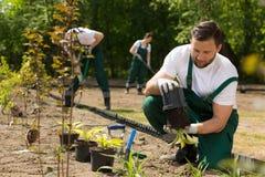Κηπουρός που παίρνει το λουλούδι από το δοχείο Στοκ φωτογραφία με δικαίωμα ελεύθερης χρήσης