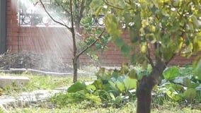 Κηπουρός που ποτίζει το χώμα/τη συγκομιδή/τη δενδροκηποκομία/τη γεωργία/το cultivatio απόθεμα βίντεο