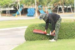 Κηπουρός που τακτοποιεί το δέντρο. στοκ εικόνα