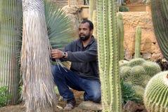 Κηπουρός στην εργασία στοκ εικόνες
