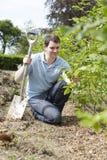 Κηπουρός τοπίων που φυτεύει το φράκτη Στοκ Φωτογραφία
