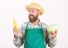 Κηπουρός Hipster στο λαχανικό λαβής ποδιών Λαχανικό λάχανων λαβής καπέλων αχύρου της Farmer corncob Γενειοφόρος παρουσίαση ατόμων στοκ φωτογραφία