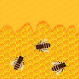 Κηρήθρα και γλυκές σταλαγματιές μελιού προϊόντα και μελισσοκομία μελισσουργείων Στοκ εικόνες με δικαίωμα ελεύθερης χρήσης