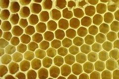 κηρήθρα μελισσοκηρού Στοκ φωτογραφία με δικαίωμα ελεύθερης χρήσης