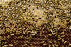 κηρήθρα μελισσών που σφρ&alph Στοκ φωτογραφία με δικαίωμα ελεύθερης χρήσης