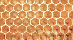 Κηρήθρα μελισσών, υπόβαθρο Στοκ Φωτογραφία