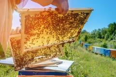 Κηρήθρα Ο μελισσοκόμος εργάζεται με τις μέλισσες κοντά στις κυψέλες aphrodisiac Θέμα της μελισσοκομίας Στοκ Φωτογραφία