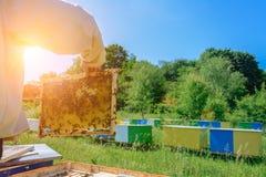Κηρήθρα Ο μελισσοκόμος εργάζεται με τις μέλισσες κοντά στις κυψέλες aphrodisiac Στοκ εικόνα με δικαίωμα ελεύθερης χρήσης