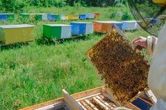 Κηρήθρα Ο μελισσοκόμος εργάζεται με τις μέλισσες κοντά στις κυψέλες aphrodisiac Στοκ Εικόνες