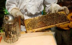 κηρήθρα πλαισίων μελισσοκόμων Στοκ φωτογραφίες με δικαίωμα ελεύθερης χρήσης