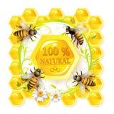 κηρήθρες μελισσών διανυσματική απεικόνιση
