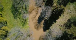 Κηφήνας που πετά κοντά επάνω από τον πρόωρο λασπώδη ποταμό άνοιξη Εναέρια 4K κάθετη αγριότητα άνοιξης άποψης όμορφη θερμή ηλιόλου απόθεμα βίντεο