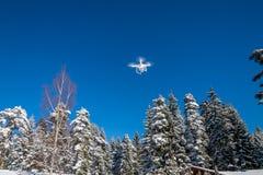 Κηφήνας που πετά πέρα από τα δέντρα Στοκ Εικόνα