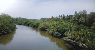 Κηφήνας που πετά πέρα από τον καταπληκτικό ευρύ ήρεμο ποταμό που ρέει στη ζούγκλα τροπικών δασών με τους τροπικούς πράσινους θάμν φιλμ μικρού μήκους