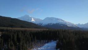 Κηφήνας που πετά στην Αλάσκα απόθεμα βίντεο