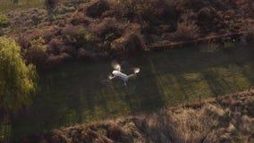 Κηφήνας που πετά υπαίθρια απόθεμα βίντεο