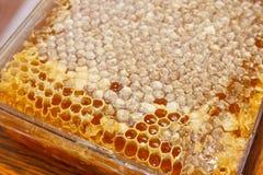 Κιβώτια Plasic με το μέλι Στοκ εικόνα με δικαίωμα ελεύθερης χρήσης