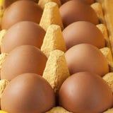 Κιβώτιο αυγών χαρτονιού με τα καφετιά αυγά Στοκ Φωτογραφία