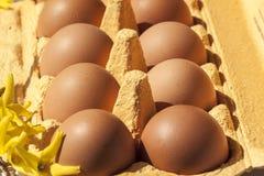 Κιβώτιο αυγών χαρτονιού με τα καφετιά αυγά Στοκ φωτογραφίες με δικαίωμα ελεύθερης χρήσης