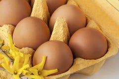 Κιβώτιο αυγών χαρτονιού με τα καφετιά αυγά Στοκ Φωτογραφίες