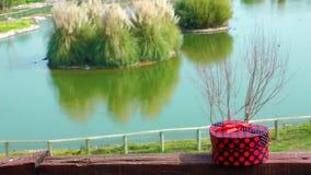 Κιβώτιο δώρων και φύση και λίμνη απόθεμα βίντεο