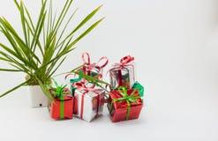Κιβώτιο και δέντρο δώρων Χριστουγέννων στο δοχείο στο άσπρο υπόβαθρο Στοκ Φωτογραφίες