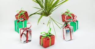 Κιβώτιο και δέντρο δώρων Χριστουγέννων στο δοχείο στο άσπρο υπόβαθρο Στοκ εικόνες με δικαίωμα ελεύθερης χρήσης