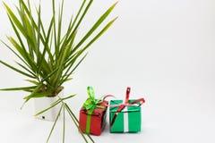 Κιβώτιο και δέντρο δώρων Χριστουγέννων στο δοχείο στο άσπρο υπόβαθρο Στοκ φωτογραφία με δικαίωμα ελεύθερης χρήσης