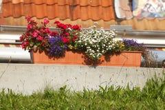 Κιβώτιο λουλουδιών Στοκ φωτογραφία με δικαίωμα ελεύθερης χρήσης