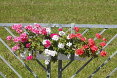 Κιβώτιο λουλουδιών Στοκ φωτογραφίες με δικαίωμα ελεύθερης χρήσης