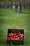 κιβώτιο μήλων Στοκ Φωτογραφία