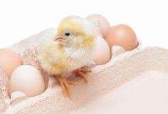 Κιβώτιο με τα αυγά και λίγο κοτόπουλο Στοκ Εικόνα