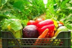 Κιβώτιο με τα λαχανικά σε ένα θερμοκήπιο Στοκ εικόνες με δικαίωμα ελεύθερης χρήσης