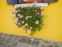 Κιβώτιο παραθύρων λουλουδιών ενάντια στον κίτρινο τοίχο Στοκ εικόνες με δικαίωμα ελεύθερης χρήσης