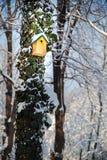 Κιβώτιο πουλιών στο δέντρο με τον κισσό στο χιόνι Στοκ φωτογραφία με δικαίωμα ελεύθερης χρήσης