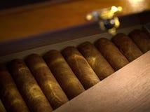 κιβώτιο του κουβανικού χεριού - γίνοντα πούρα στο ξύλινο humidor στοκ φωτογραφίες