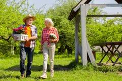Κιβώτιο φροντίδας συζύγων με τα δοχεία λουλουδιών που περπατούν κοντά στη σύζυγό του στοκ φωτογραφίες με δικαίωμα ελεύθερης χρήσης