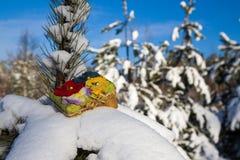 Κιβώτιο δώρων στις ερυθρελάτες Στοκ εικόνες με δικαίωμα ελεύθερης χρήσης