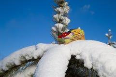 Κιβώτιο δώρων στον κλάδο έλατου Στοκ εικόνα με δικαίωμα ελεύθερης χρήσης