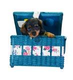 κιβώτιο dachshund που ράβει Στοκ φωτογραφία με δικαίωμα ελεύθερης χρήσης
