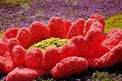 ΚΙΕΒΟ, ΟΥΚΡΑΝΙΑ - 23 ΑΥΓΟΎΣΤΟΥ: έκθεση λουλουδιών στο Κίεβο, Ουκρανία στοκ φωτογραφίες με δικαίωμα ελεύθερης χρήσης