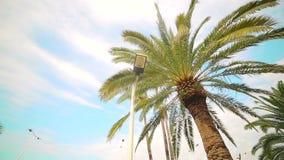 Κινήσεις καμερών γύρω από τους φοίνικες που στέκονται στο πάρκο, δίπλα στο στυλοβάτη φωτισμού οδών απόθεμα βίντεο