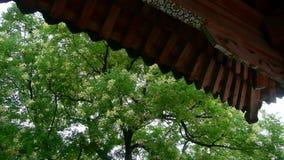 Κινεζικές αρχαίες μαρκίζες οικοδόμησης κάτω από τα πολύβλαστα πράσινα δέντρα, φυσώντας φύλλα αερακιού απόθεμα βίντεο