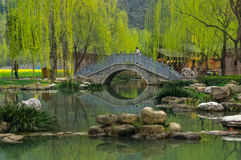 Κινεζική γέφυρα κοντά στη λίμνη κατά τη διάρκεια της πρώιμης άνοιξης Στοκ Φωτογραφία