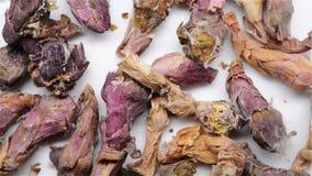 Κινεζική ιατρική χορταριών Farfarae Flos ή του κοινού λουλουδιού Coltsfoot φιλμ μικρού μήκους