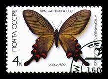 Κινεζικός ανεμόμυλος (Atrophaneura alcinous), πεταλούδες serie, cir Στοκ εικόνα με δικαίωμα ελεύθερης χρήσης
