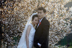 Κινεζικός γάμος ζευγών portraint μπροστά από τα άνθη κερασιών Στοκ Εικόνα