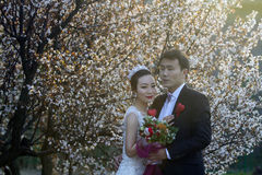 Κινεζικός γάμος ζευγών portraint μπροστά από τα άνθη κερασιών Στοκ φωτογραφία με δικαίωμα ελεύθερης χρήσης