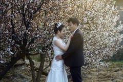 Κινεζικός γάμος ζευγών portraint μπροστά από τα άνθη κερασιών Στοκ Εικόνες